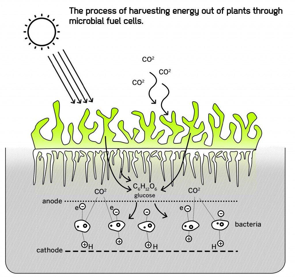 атмосферное электричество и фотосинтез передней
