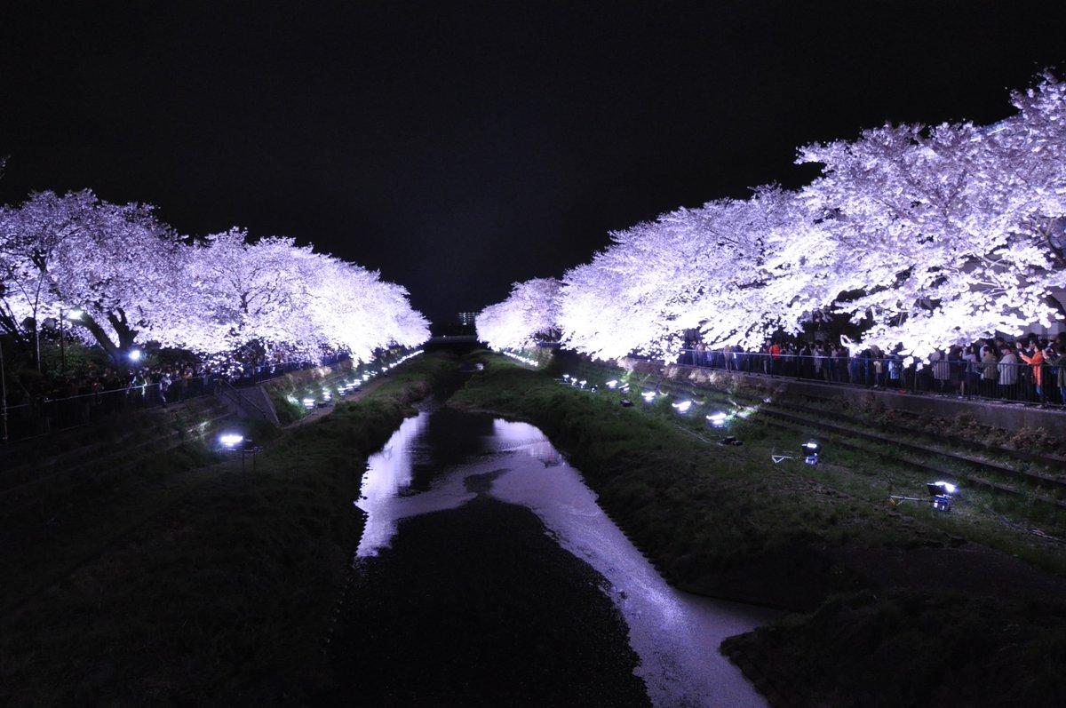 【野川の桜ライトアップ 開催日程が決定】明日4月5日(火)午後6時~9時。ライトに照らされる幻想的な野川の桜をお楽しみください。一夜限りのイベントです! https://t.co/bOtrEgIa7E #chofu #調布 https://t.co/ILgnF2gk65