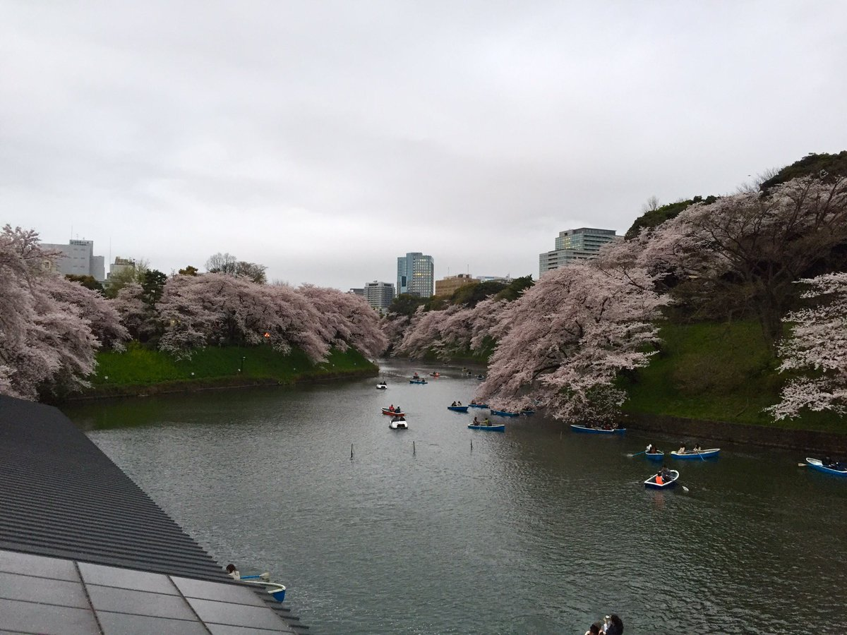 千鳥ヶ淵と中目黒の桜観てきた!! https://t.co/WkOevtVXpA