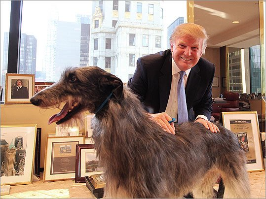 Trump S Dog Spinee