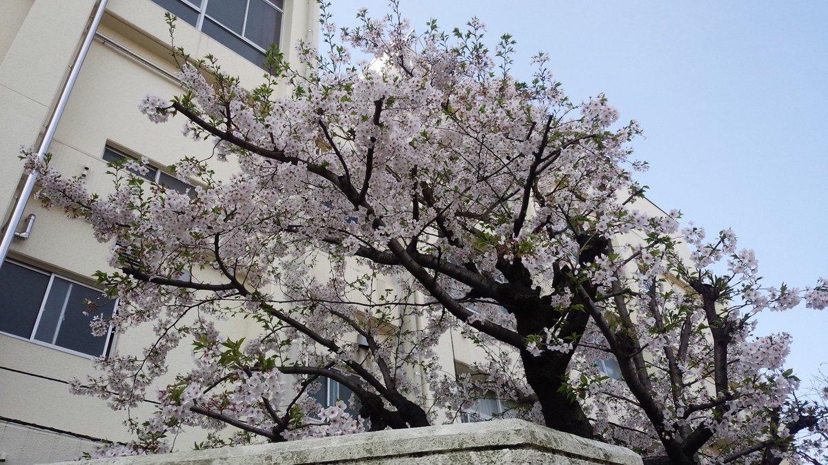 2016年04月 御園中の桜満開