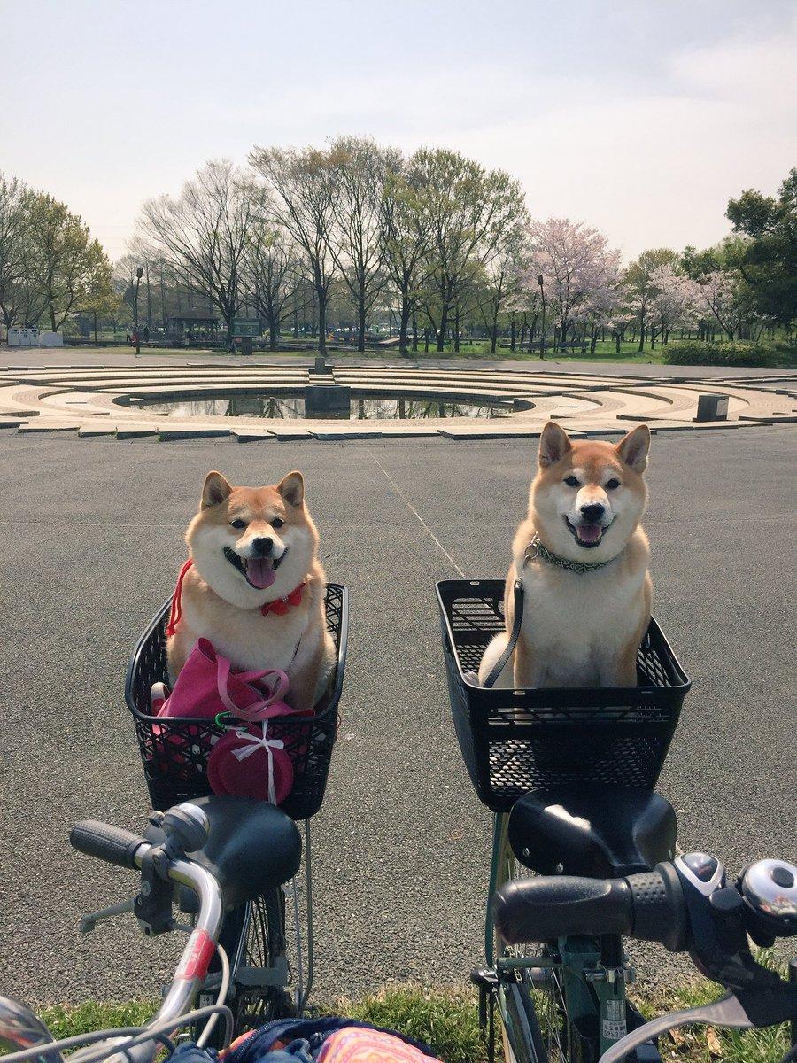 お花見お散歩No② pic.twitter.com/u4PmK15tEl