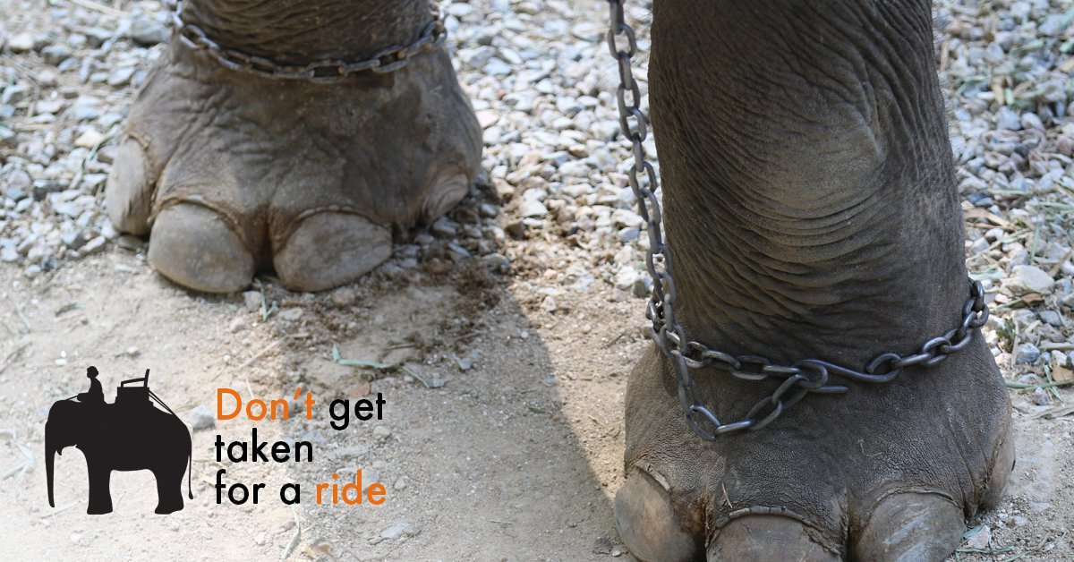 Despite what you may see in travel brochures, the reality for #elephants at tourist attractions is one of suffering https://t.co/JqASGGraZF