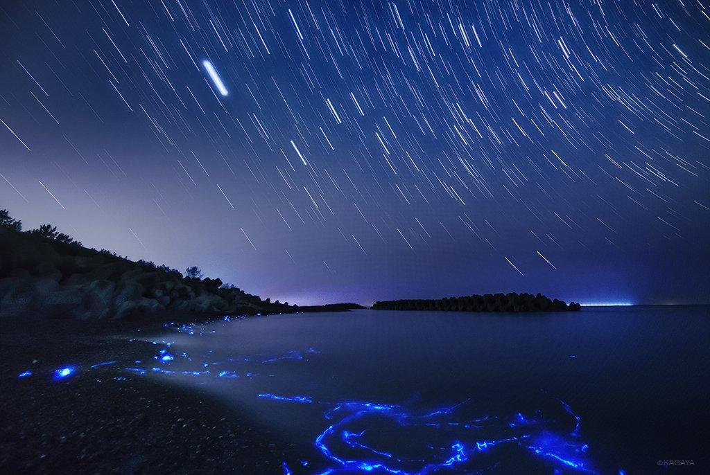 本日未明、富山の海岸で撮影しました。月のない夜、大潮、そして満潮。ホタルイカが次々浜に打ち寄せました。波が寄せるたびに燐光をあげ、まるで「銀河鉄道の夜」の世界。(高感度、長い露出で撮影。いっぺんに見えた光ではありません) pic.twitter.com/uJDq0traVZ