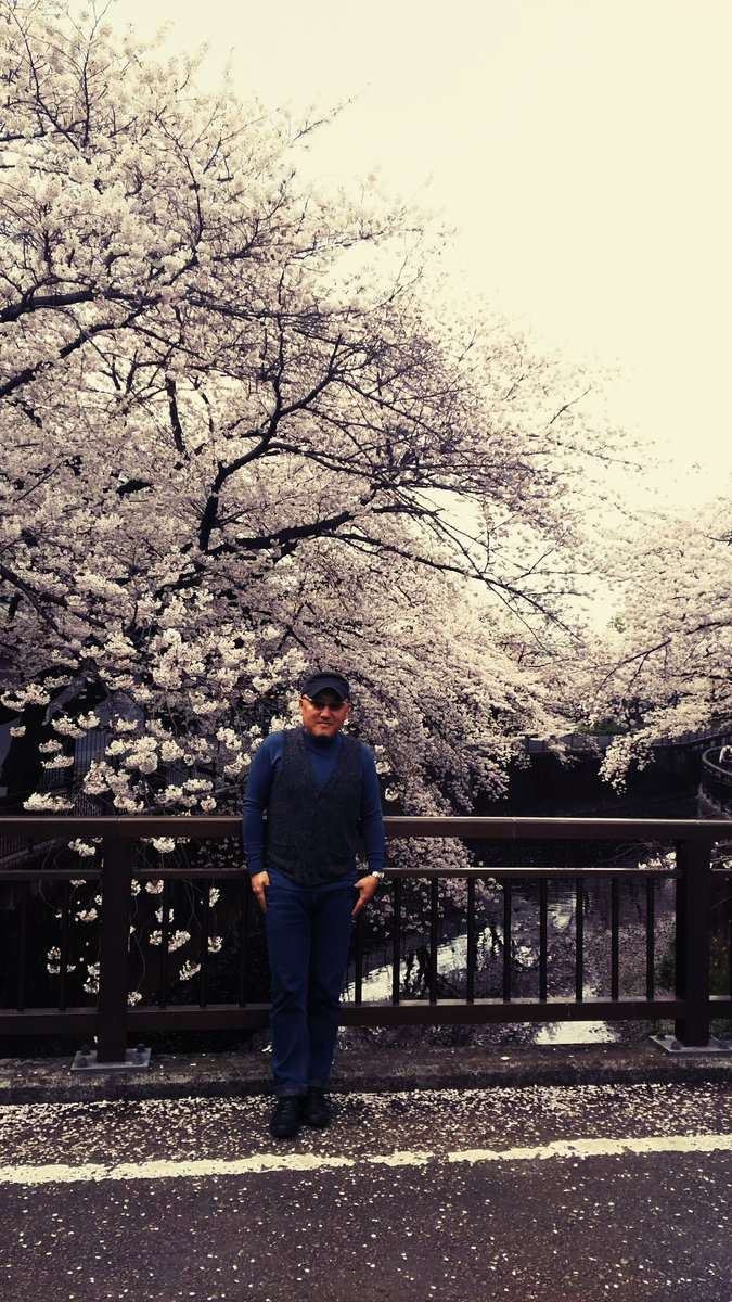 撮影所の桜は満開だが、『俺の桜』はまだ始まったばかり pic.twitter.com/lqeObWQbuy