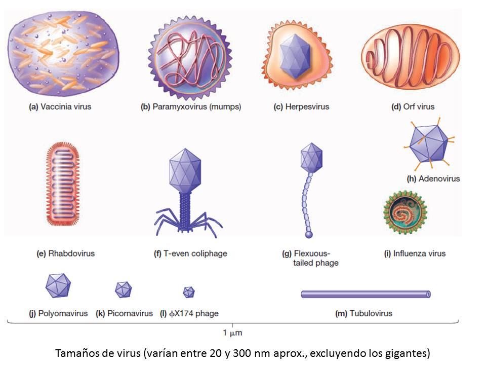 web de virus