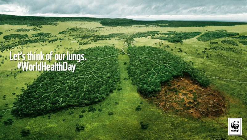 This #WorldHealthDay,  lets think of our lungs - our forests! Choose #FSC to help: https://t.co/lRWiZU5BoO https://t.co/pQ7SJICDB8