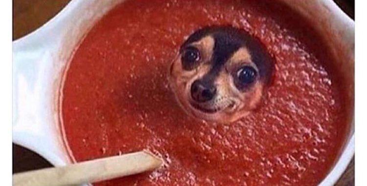 I'm lost in the sauce https://t.co/iKo6B0LAAz