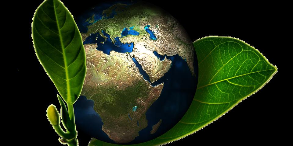 read erfolgs und umweltorientierte