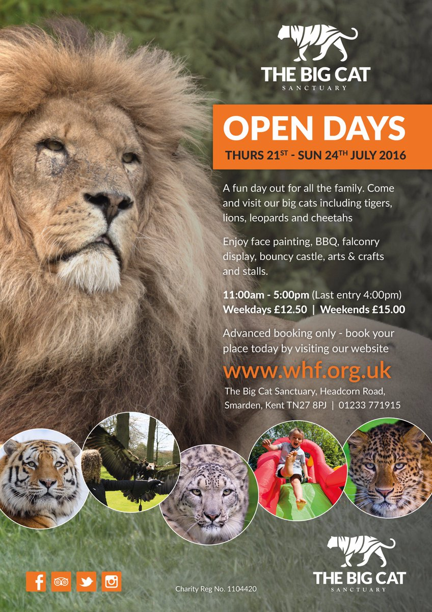 Big Cat Sanctuary On Twitter Whf Open Day Tickets Now Available Book Your Tickets They Are Selliing Out Fast Https T Co Wntnbsthya