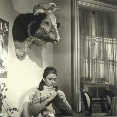 Check out Audrey Hepburn knitting! The best part is the cat on top of the cow head! https://t.co/7MxOJHJIeI
