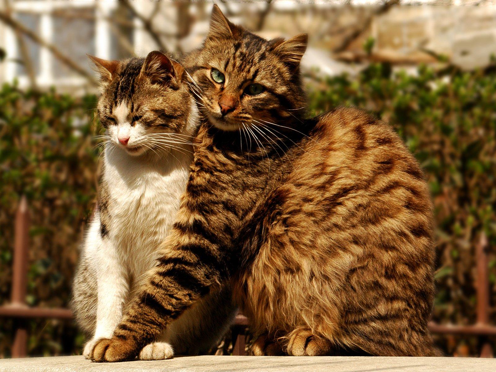 Любовь к кошкам картинки