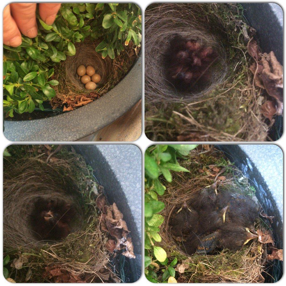 Thumbnail for Flying the Nest | Handmade Theatre | #Week53