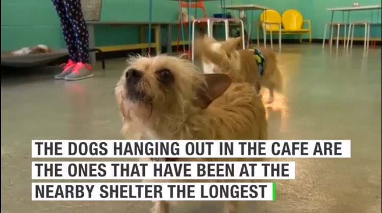 This dog cafe in LA let's you sip coffee or tea while hanging out with adoptable dogs! @TheDogCafe_LA #LoveThis https://t.co/K6qReHQUYc