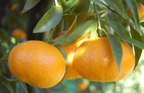 Arance e Limoni contro la sindrome metabolica