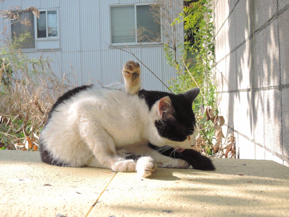 僕、犬派だったんだけど、写真撮ってるうちに猫も好きになり始めている気がする。