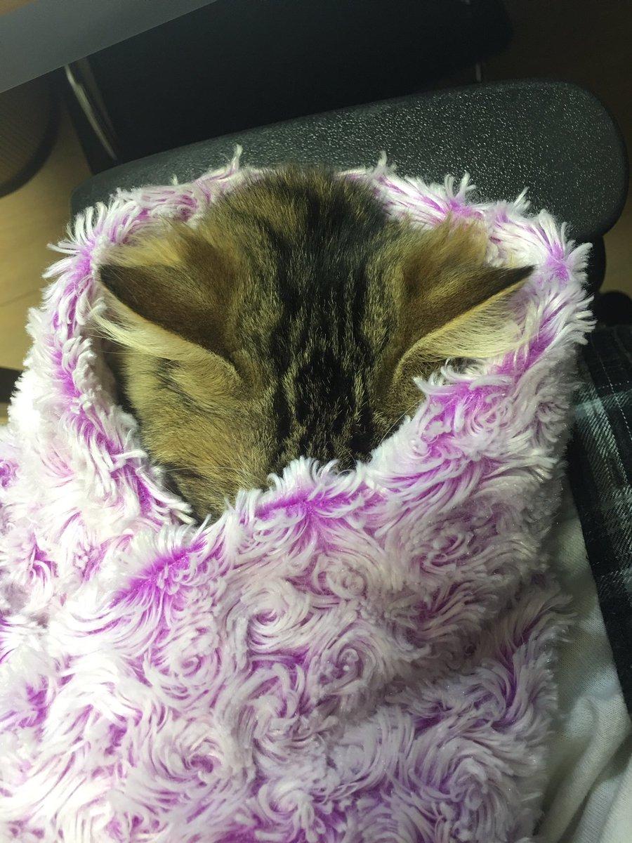 【予想外】いたずら大好きな猫さんをブランケットに包んだ結果!