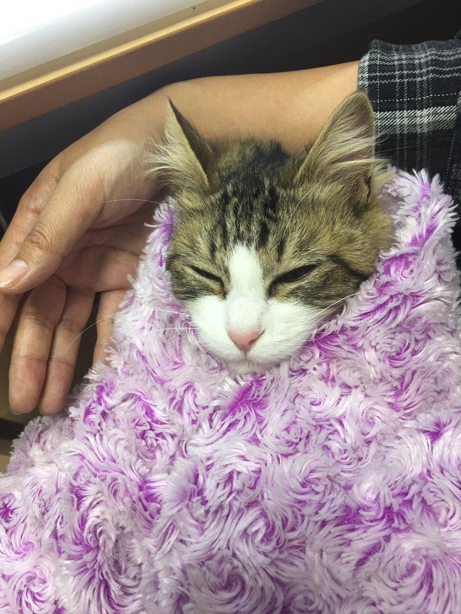 【予想外】いたずら大好きな猫さんをブランケットに包んだ結果www