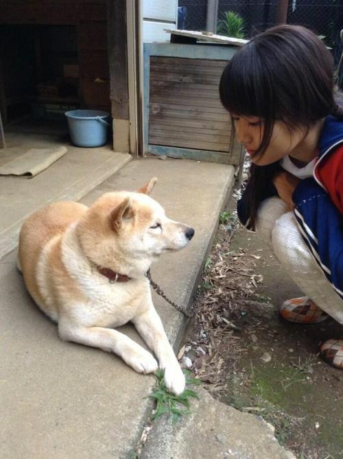 有村架純と柴犬