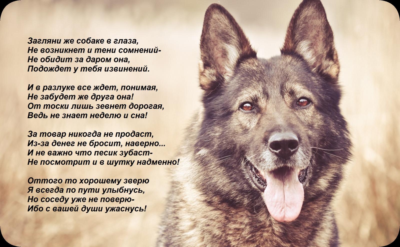 Открытки про собак со стихами, днем рождения женщине