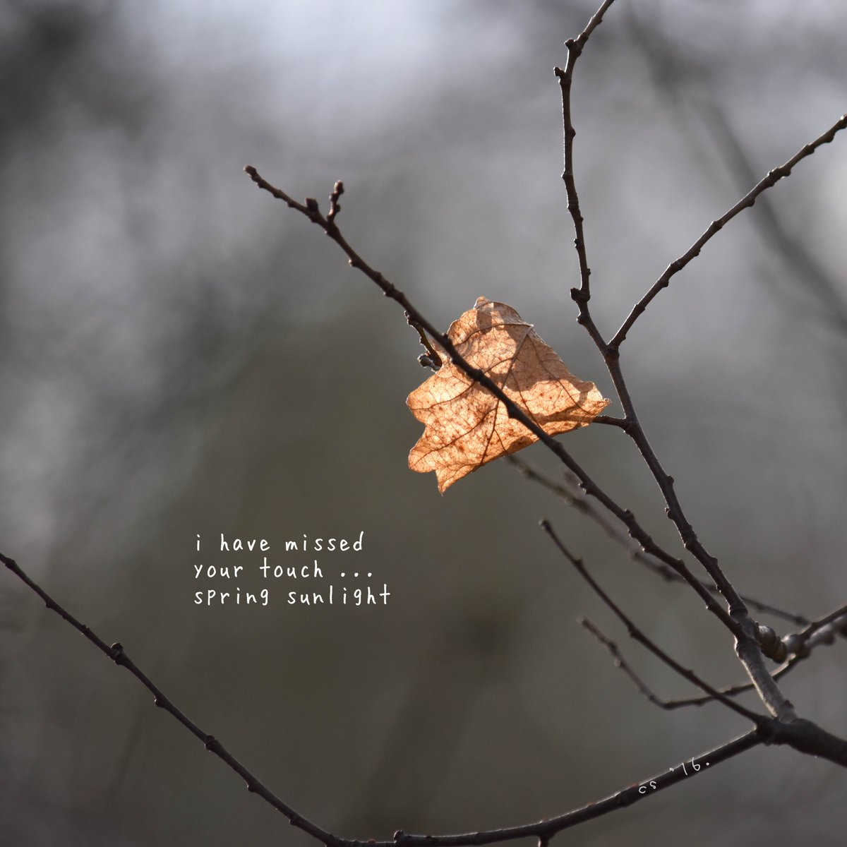 i have missed your touch ... spring sunlight  #micropoetry #haiga https://t.co/SlIcKrt5Gn