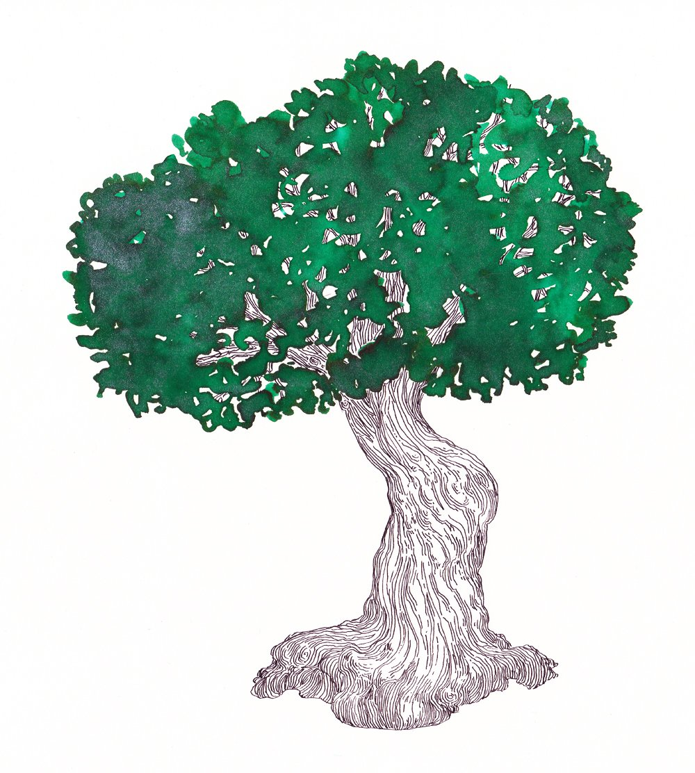 Drawing of a tree with Diamine Magical Forest foutnain pen ink.