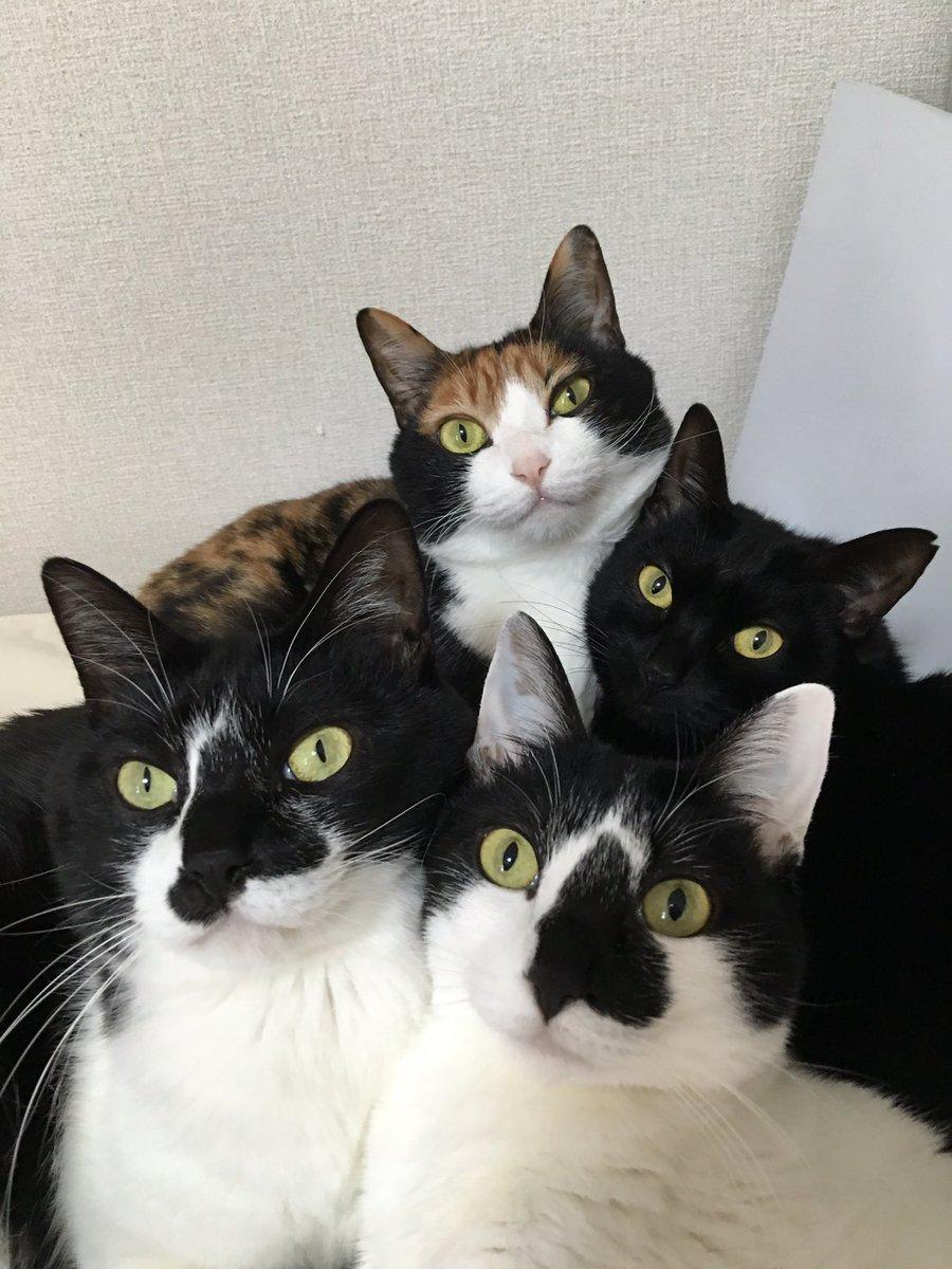 おかえりニャさい!ご主人様の帰宅が嬉しい猫さん達の圧力がすごすぎる件www