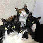 おかえりニャさい!ご主人様の帰宅が嬉しい猫さん達の圧力がすごすぎる件!