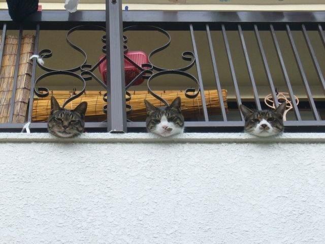がんくびそろえ猫。 pic.twitter.com/8ijZYnJaMZ