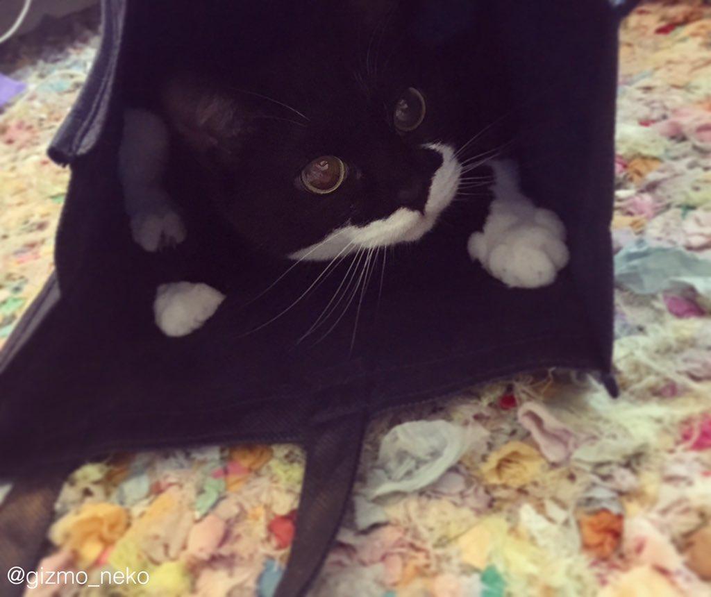 箱やら袋やら、ほんのちょっっっっっっっっっと床に置いただけで次の瞬間もう猫の物になってる pic.twitter.com/EDBpCQtNhQ