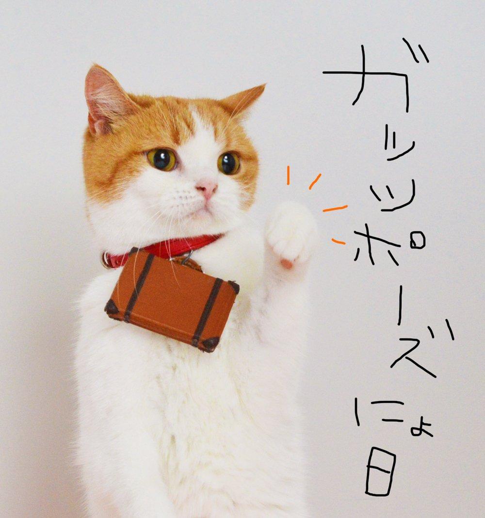 ニャッツ! #ガッツポーズの日 pic.twitter.com/KOw63HXtJZ