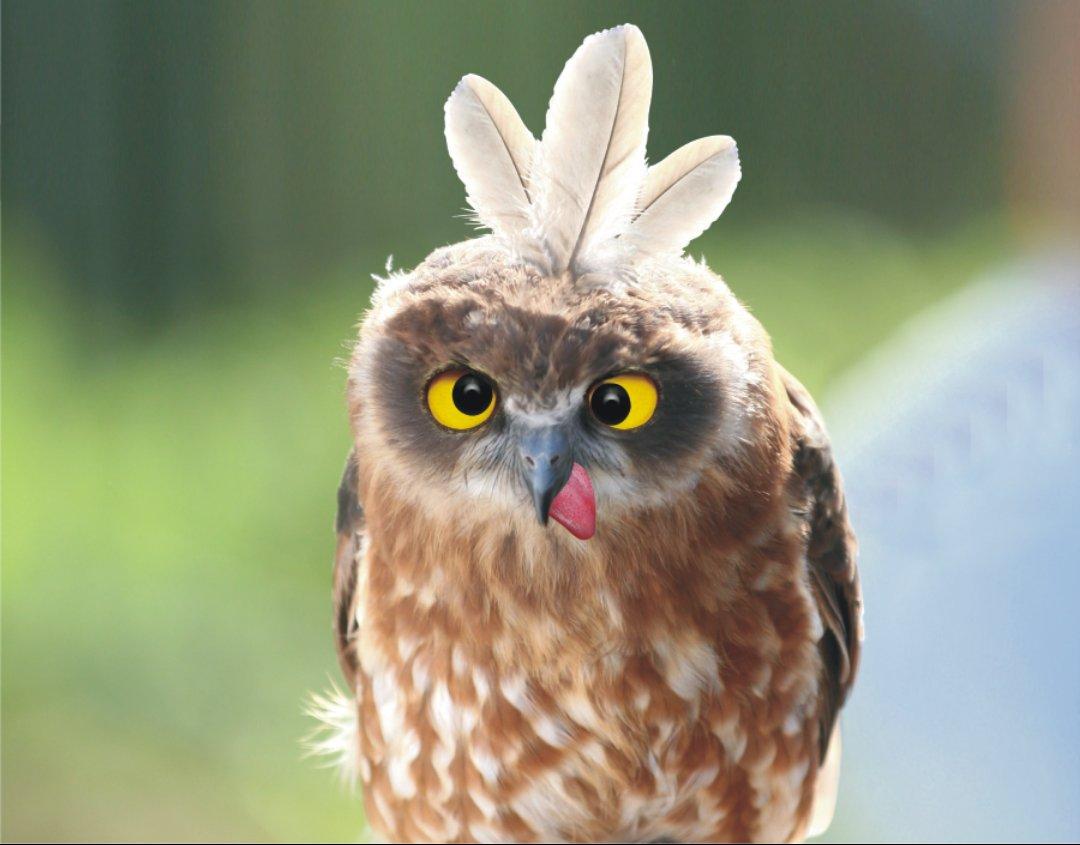 уставшие птицы картинка для были брошены принудительные