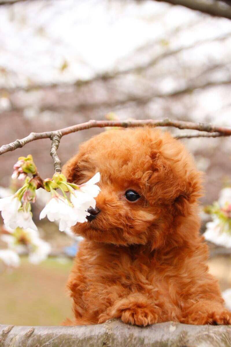 愛犬をつれてお花見♪写真を撮ると時はプロの顔をするワンちゃんが可愛すぎると話題にwww
