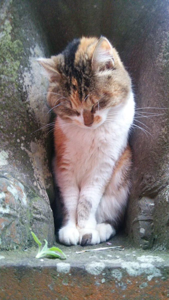 昨日江ノ島行ったときに遭遇した猫さま。すっぽりハマってて微動だにしないから最初置物かと思った。