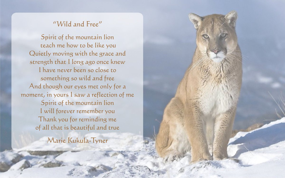 mountain lion poem