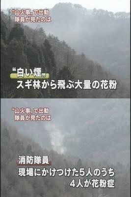 拾い物だけど、山火事の通報を受けて現場に消防士が駆けつけたら実は大量の花粉が煙に見えただけで、さらには駆けつけた消防士5人のうち4人が花粉症だったというオチのニュース画像好き https://t.co/bfTmrRny4N