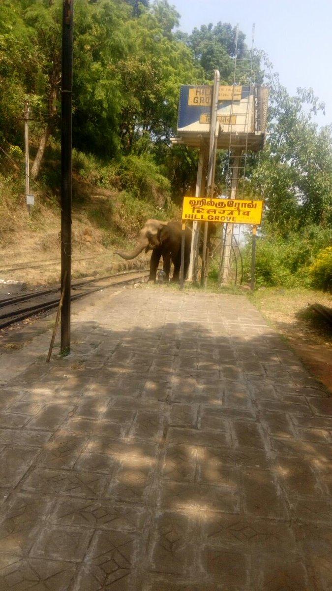 Cg rfeAU8AEdBjj?format=jpg&name=medium - The Nilgiri mountain elephants