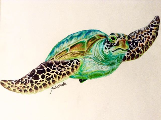 pictures of sea turtles drawings colorful