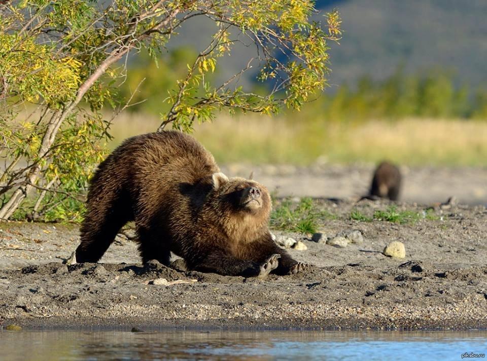 Открытки с добрым утром медведь