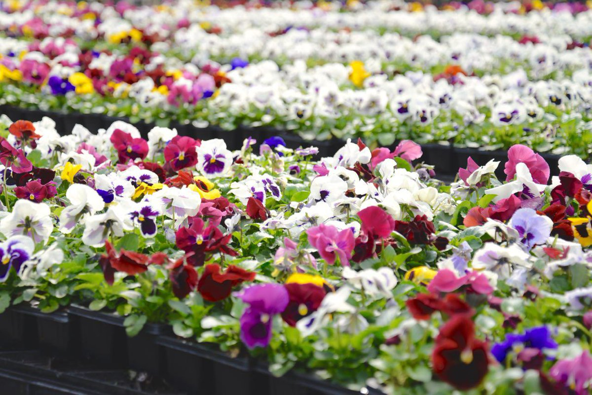 Букет живых, заказ рассады цветов