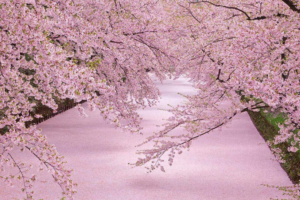 おはようございますo(^_-)O 4月26日 火曜日 20度 青森は快晴♬  今日は良い風呂の日だそうです。