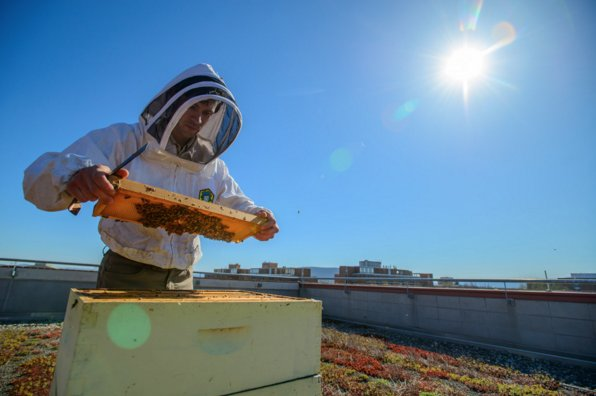 #PennState @agsciences researchers collaborate to combat bee declines https://t.co/Hcy12kyPna #PSU4Bees https://t.co/EXlIlWWwz0