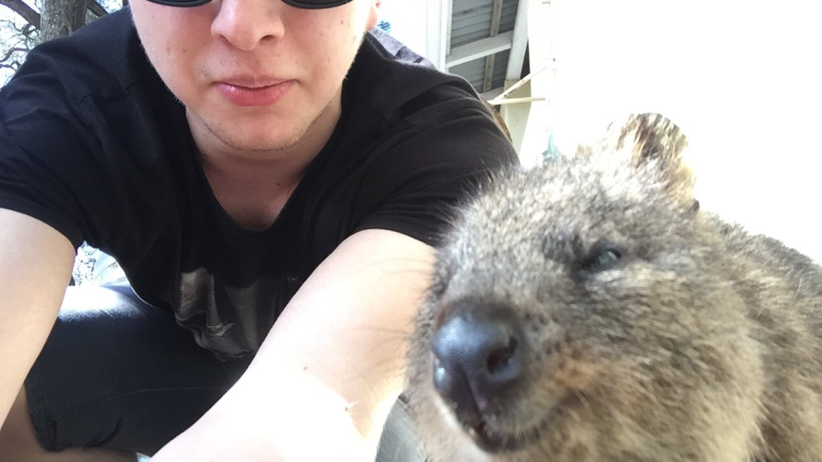 Here's a Quokka and I https://t.co/XGg8SedzOh