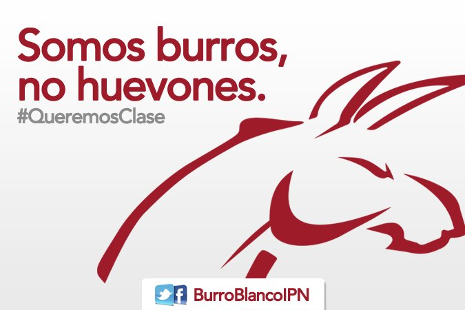 Burro blanco ipn on twitter somos burros no huevones for Burro blanco