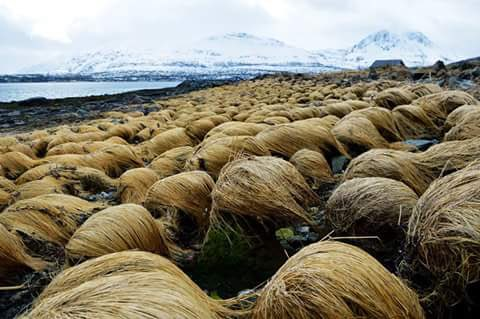 Rare image of where Donald Trump grows his hair. https://t.co/SLvbsufK9B
