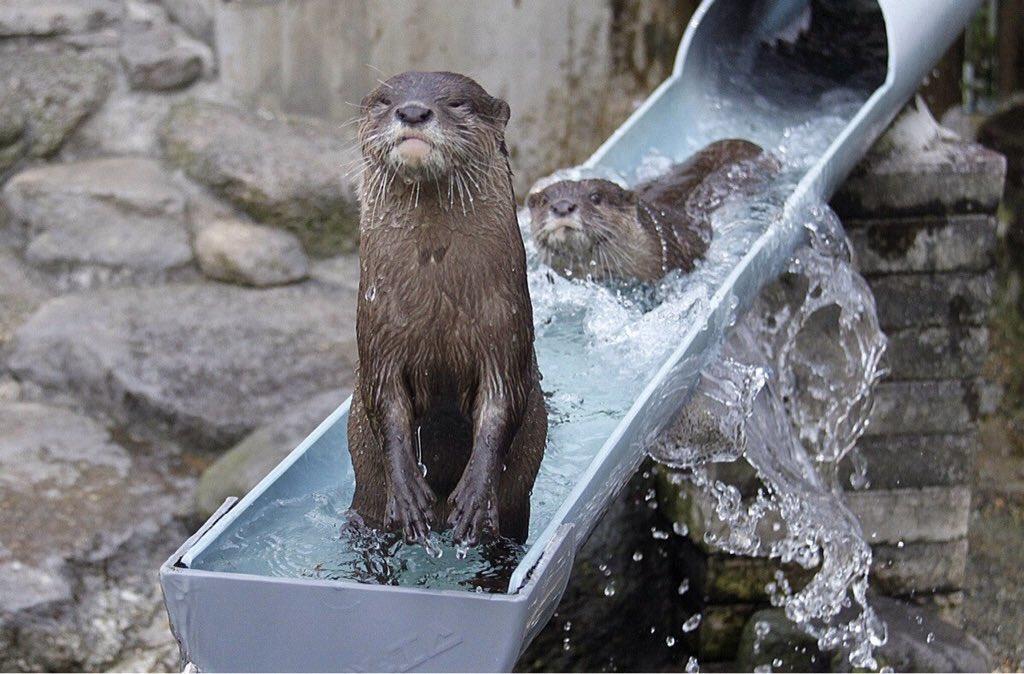 Hello from the otter slide https://t.co/728qKdu1fR