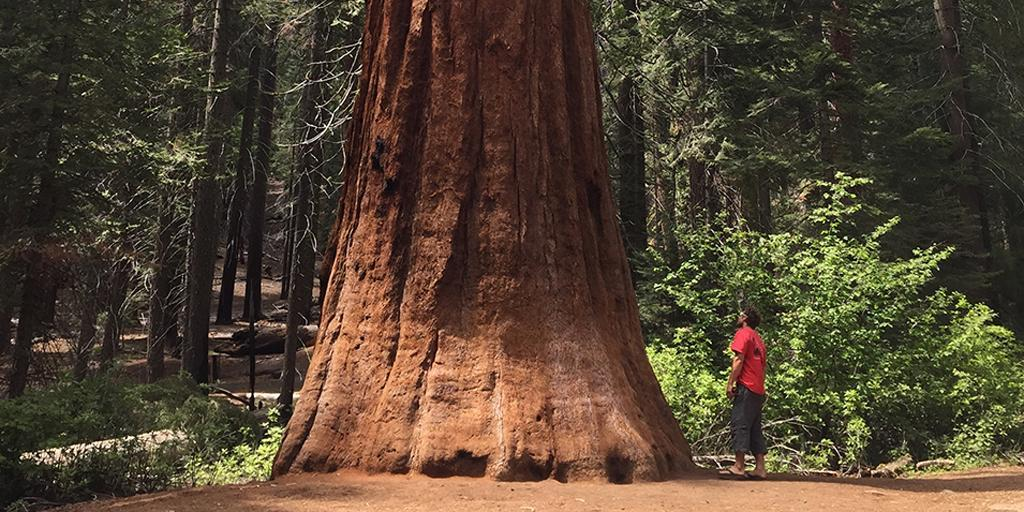 Tell us why #onetree matters and win a trip to Redwood National Park:  https://t.co/5wpVyZ2G6r https://t.co/2FbHxqliiV