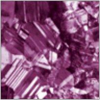 dynamics of the chemostat