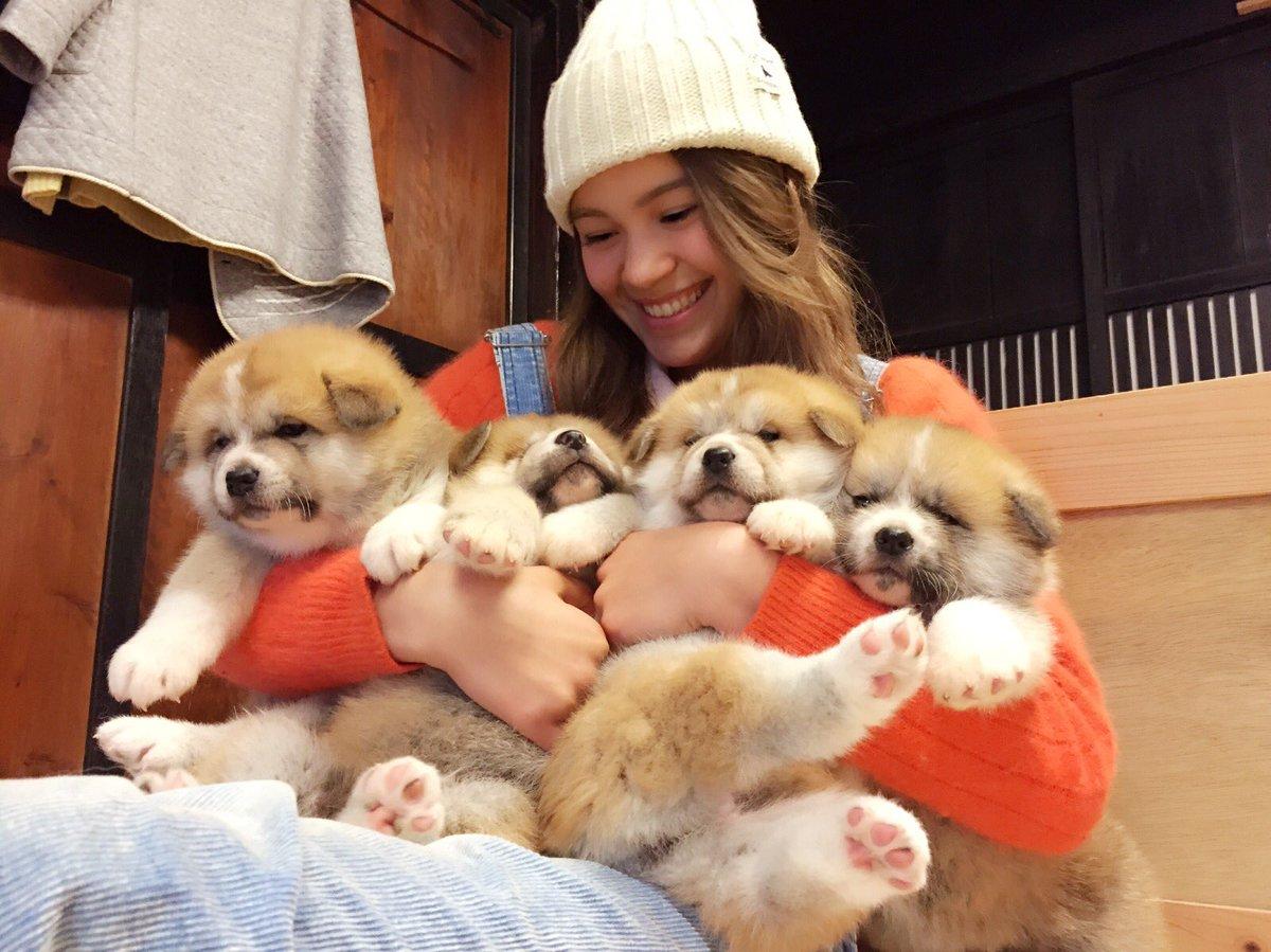 志村動物園観てましたが、日本犬を育ててる3人の …