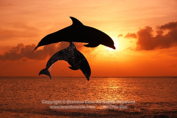 Animalsimage On Twitter Look Collection Of Dolphins Jumping In The